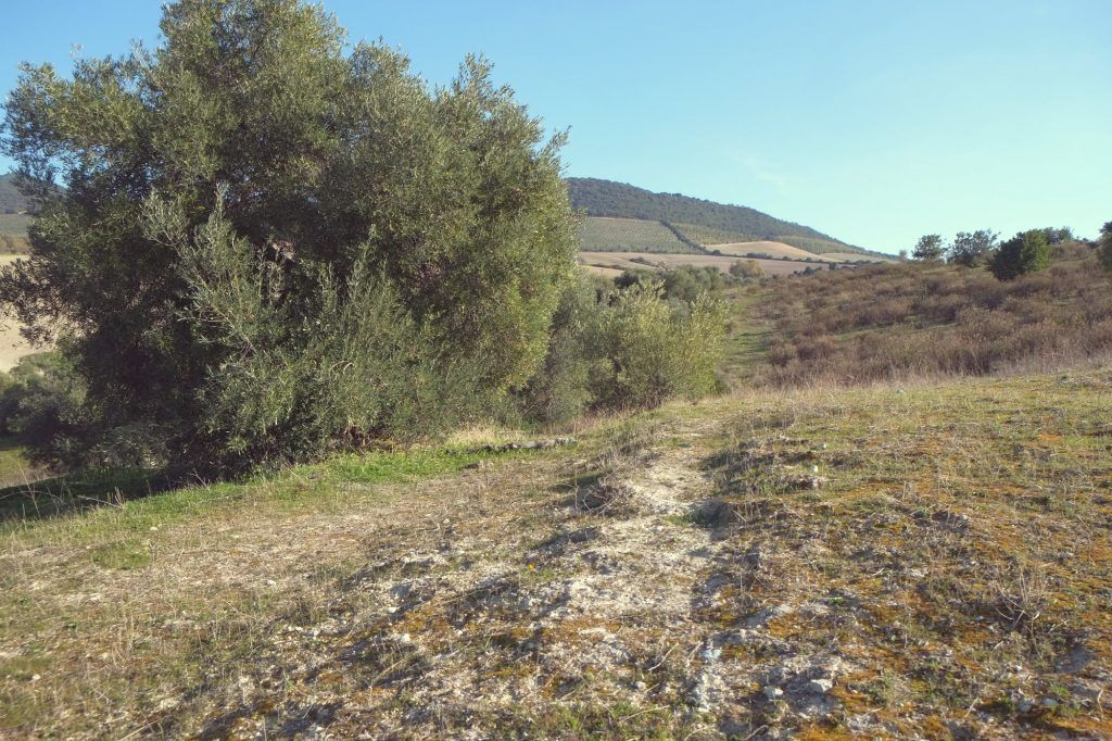 Olive Orchad Degraded Soil